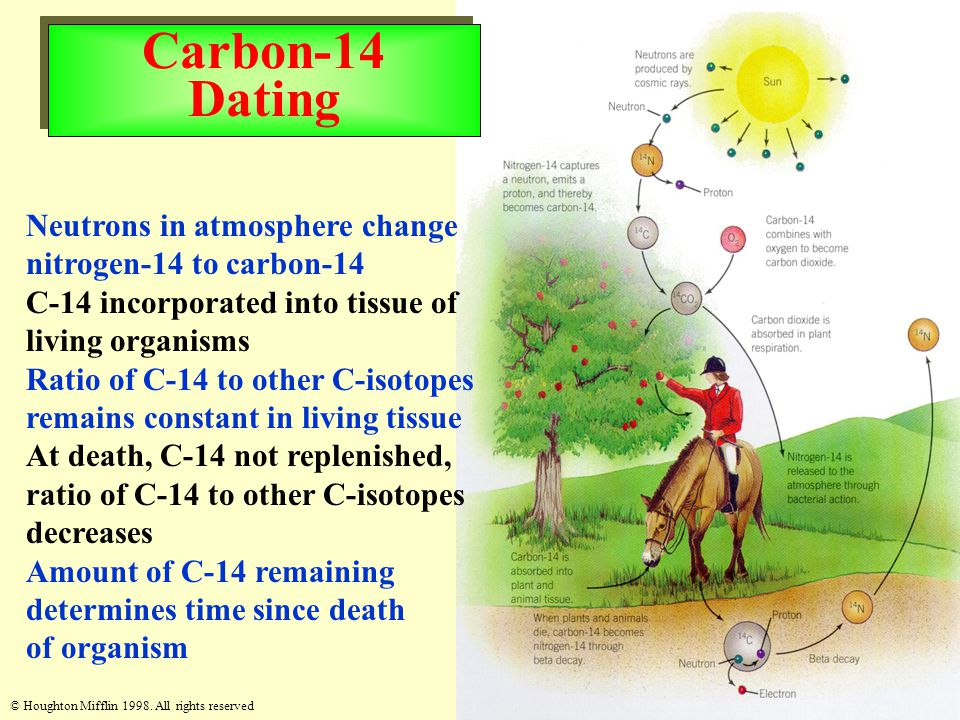 © Houghton Mifflin 1998. All rights reserved Carbon-14 Dating Neutrons in atmosphere change nitrogen-14 to carbon-14 C-14 incorporated into tissue of