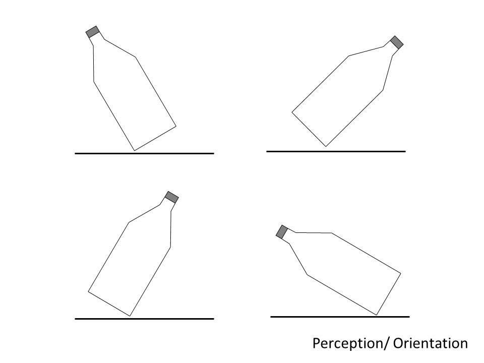 Perception/ Orientation