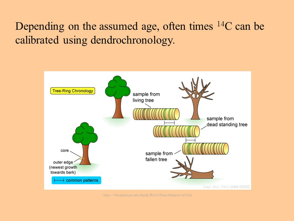 https://wikispaces.psu.edu/display/Biol110Sum/Antiquity+of+Life Depending on the assumed age, often times 14 C can be calibrated using dendrochronology.