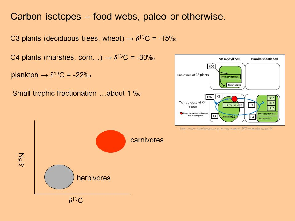 Carbon isotopes – food webs, paleo or otherwise.