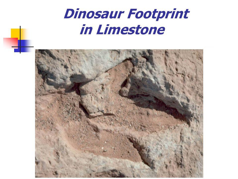Dinosaur Footprint in Limestone