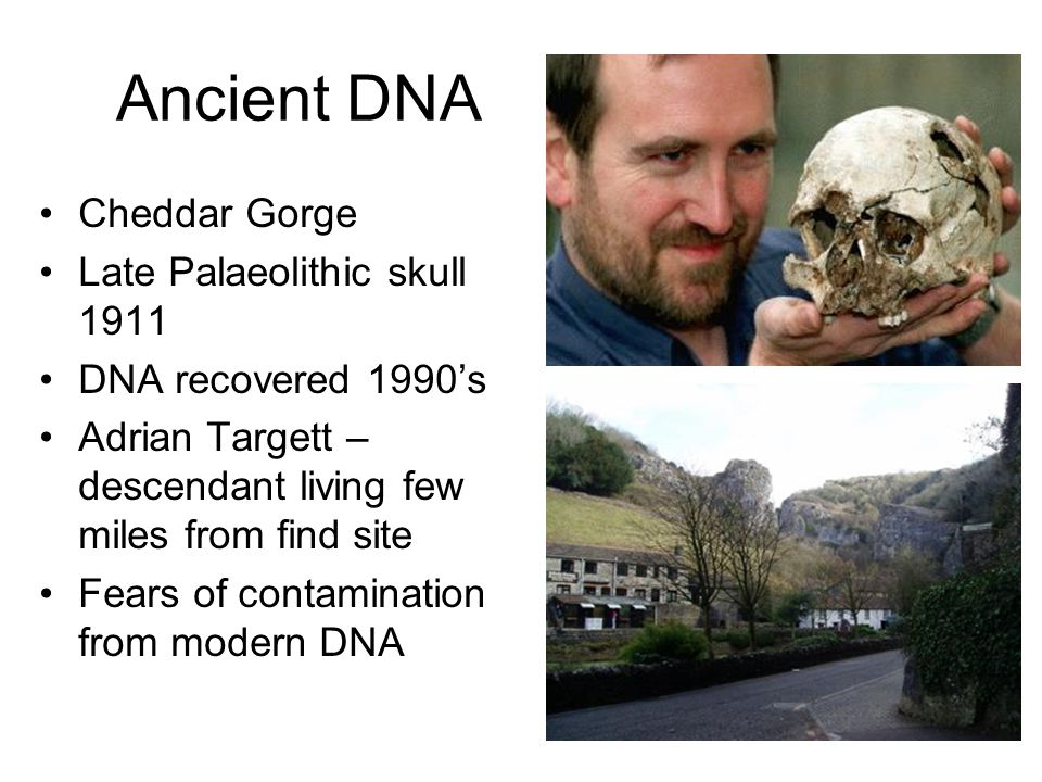 Ancient DNA Cheddar Gorge Late Palaeolithic skull 1911 DNA recovered 1990s Adrian Targett – descendant living few miles from find site Fears of contam