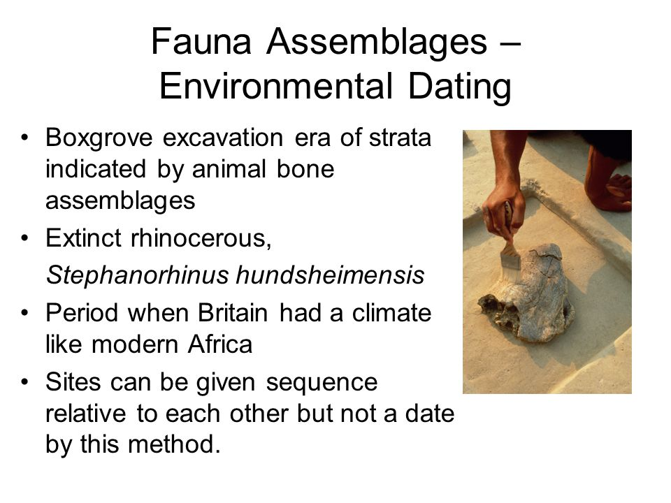 Fauna Assemblages – Environmental Dating Boxgrove excavation era of strata indicated by animal bone assemblages Extinct rhinocerous, Stephanorhinus hundsheimensis Period when Britain had a climate like modern Africa Sites can be given sequence relative to each other but not a date by this method.
