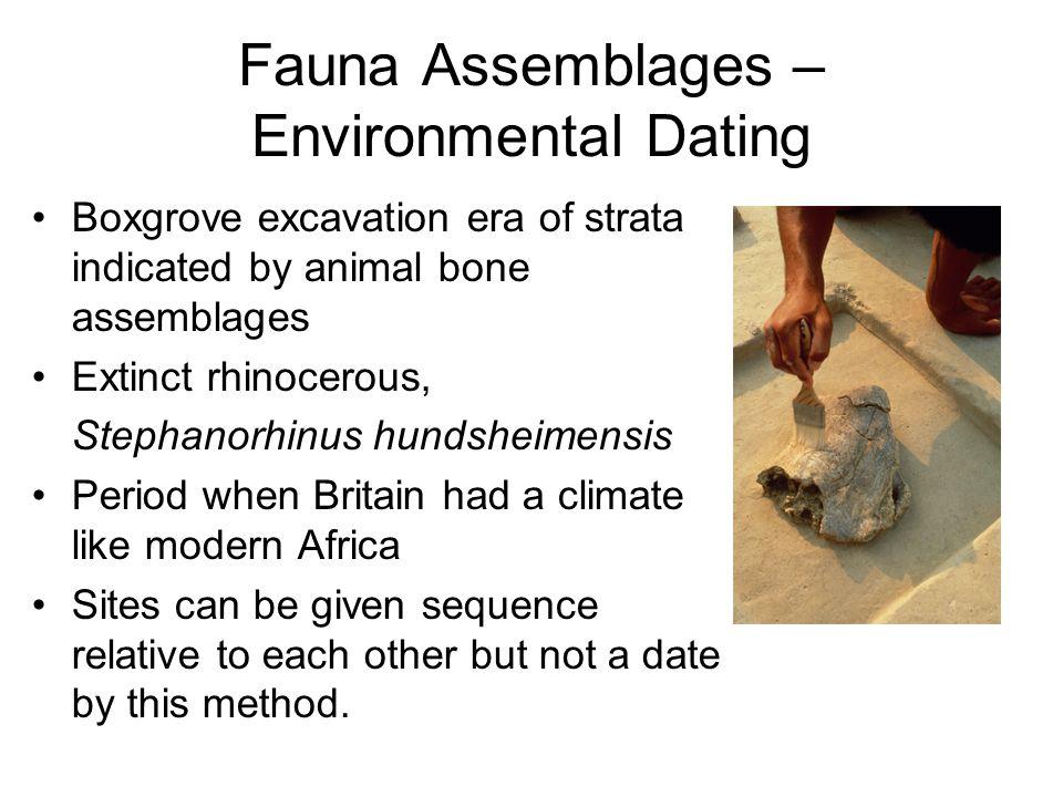 Fauna Assemblages – Environmental Dating Boxgrove excavation era of strata indicated by animal bone assemblages Extinct rhinocerous, Stephanorhinus hu