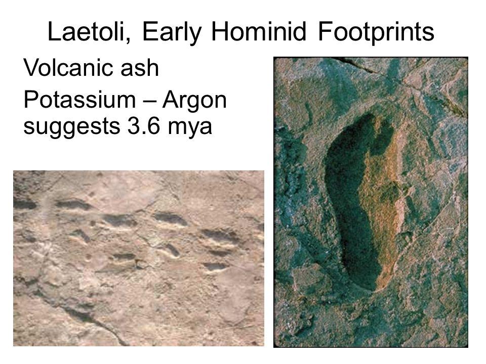 Laetoli, Early Hominid Footprints Volcanic ash Potassium – Argon suggests 3.6 mya