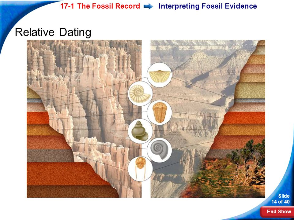 End Show Slide 14 of 40 17-1 The Fossil RecordInterpreting Fossil Evidence Relative Dating