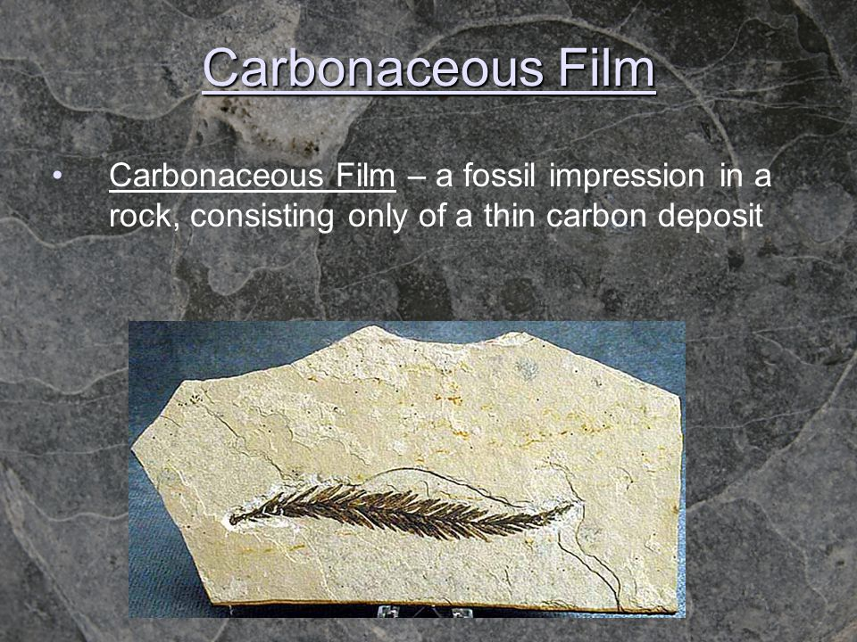 Carbonaceous Film Carbonaceous Film – a fossil impression in a rock, consisting only of a thin carbon deposit
