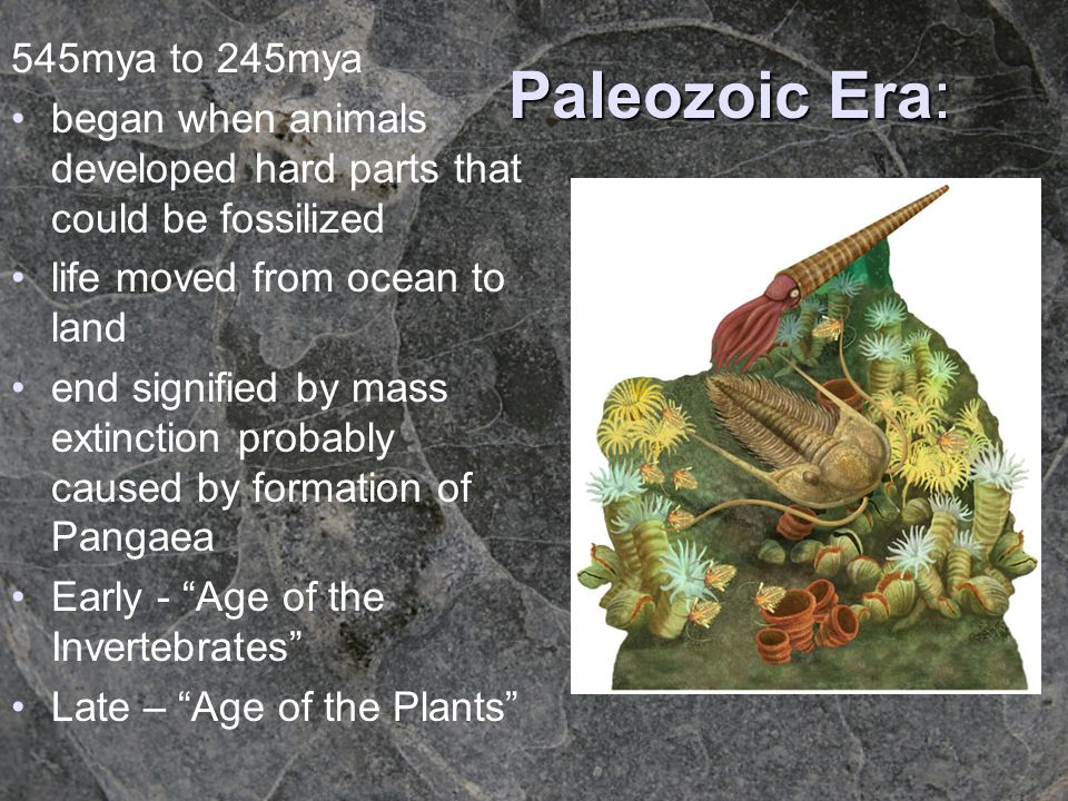Paleozoic Era: 545mya to 245mya began when animals developed hard parts that could be fossilized life moved from ocean to land end signified by mass e
