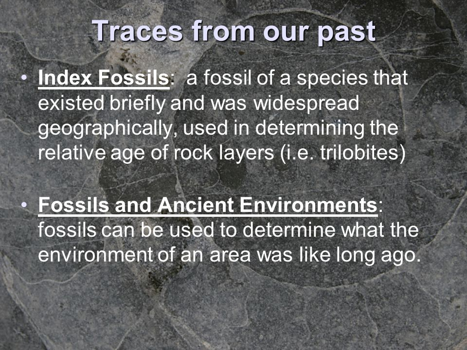 Traces from our past Index Fossils: a fossil of a species that existed briefly and was widespread geographically, used in determining the relative age