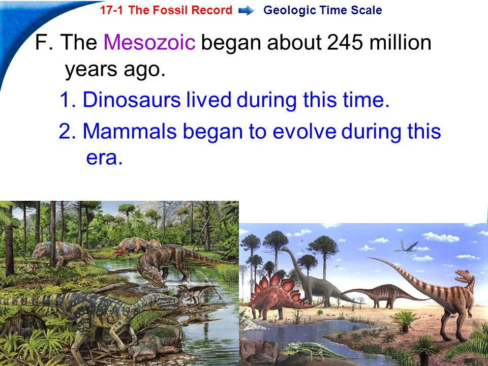 End Show Slide 18 of 40 17-1 The Fossil Record Copyright Pearson Prentice Hall Geologic Time Scale F. The Mesozoic began about 245 million years ago.