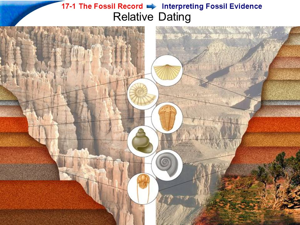 End Show Slide 9 of 40 17-1 The Fossil Record Copyright Pearson Prentice Hall Interpreting Fossil Evidence Relative Dating
