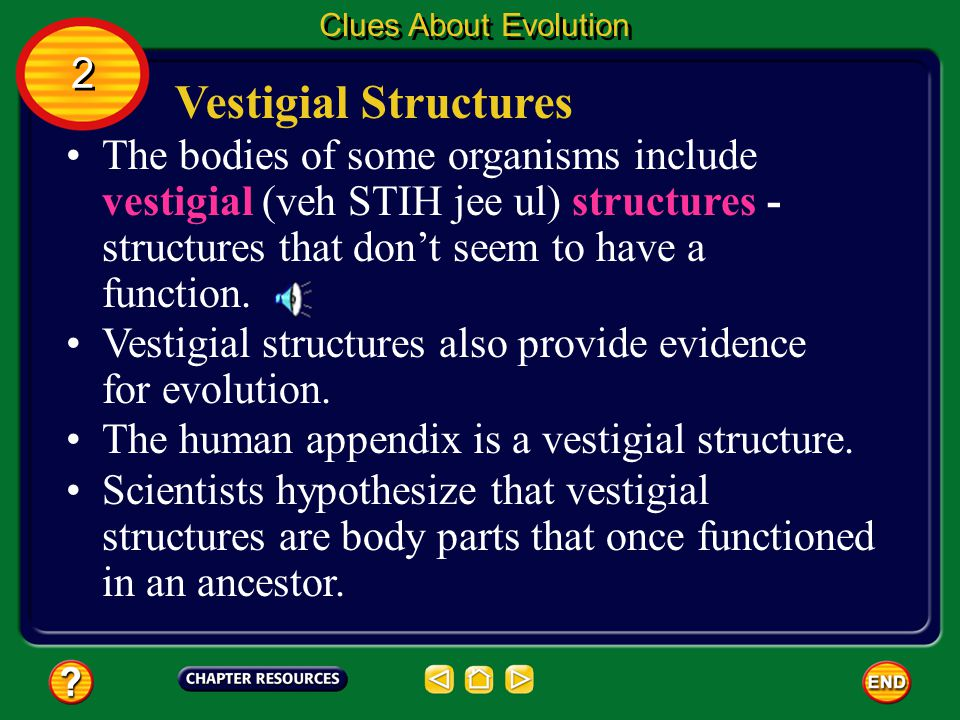 Homologous Structures Body parts that are similar in origin and structure are called homologous (hoh MAH luh gus). Clues About Evolution 2 2 Homologou