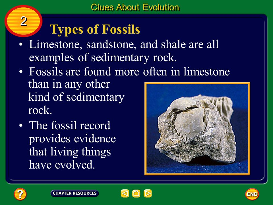 Types of Fossils Much of the evidence for evolution comes from fossils. A fossil is the remains, an imprint, or a trace of a prehistoric organism. Clu