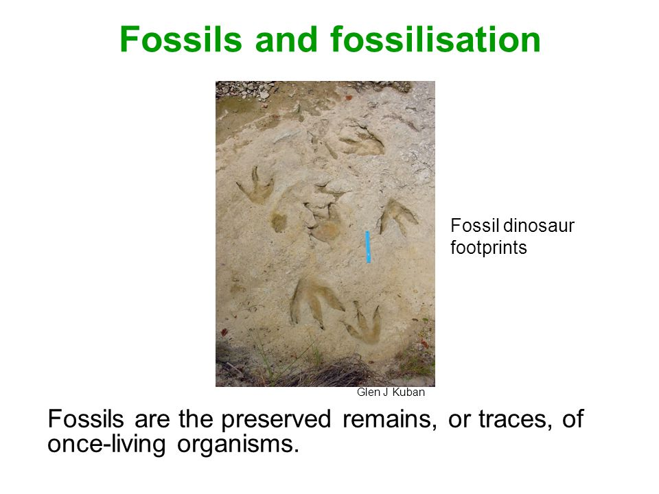 Fossils and fossilisation Fossils are the preserved remains, or traces, of once-living organisms.