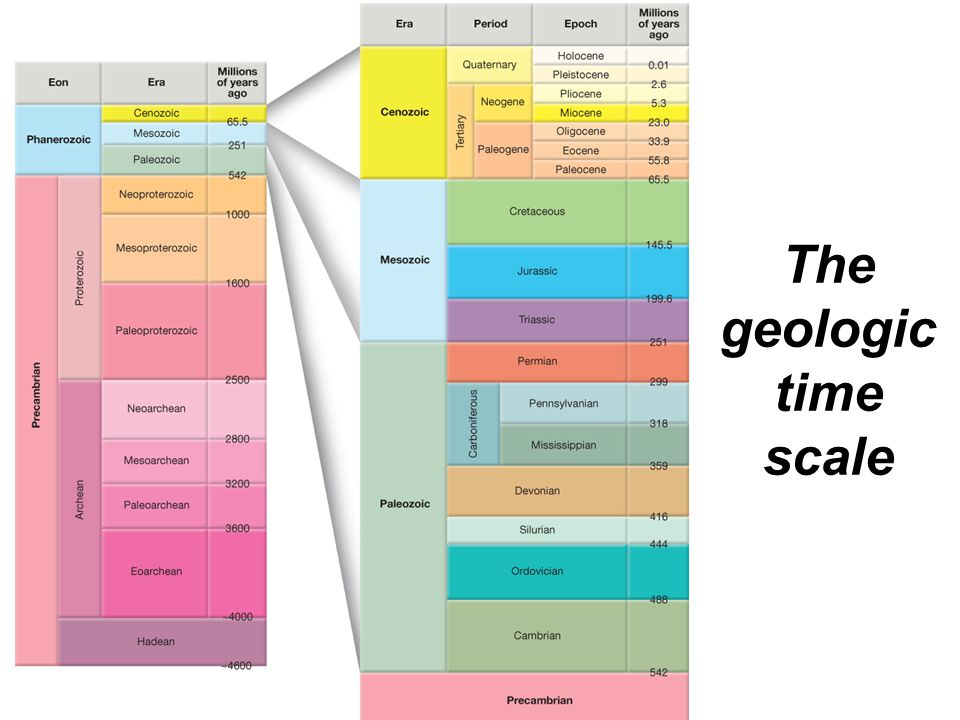 © 2011 Pearson Education, Inc. The geologic time scale