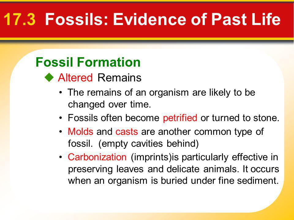 Fossil Formation 17.3 Fossils: Evidence of Past Life Altered Remains The remains of an organism are likely to be changed over time. Fossils often beco