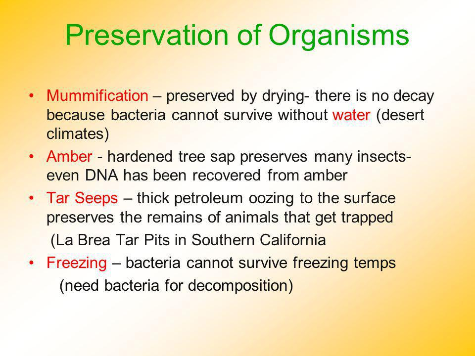 Preservation of Organisms Mummification – preserved by drying- there is no decay because bacteria cannot survive without water (desert climates) Amber