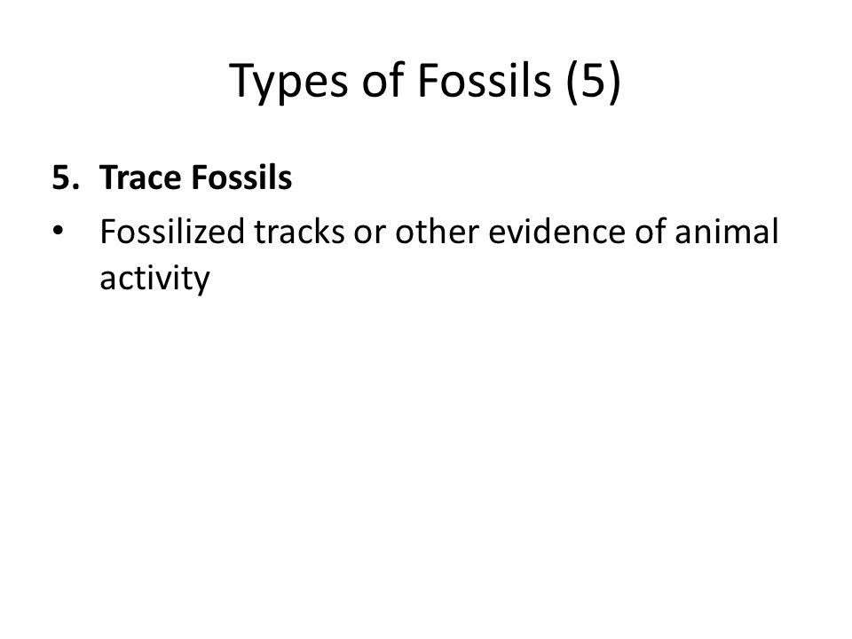 Types of Fossils (5) 5.Trace Fossils Fossilized tracks or other evidence of animal activity