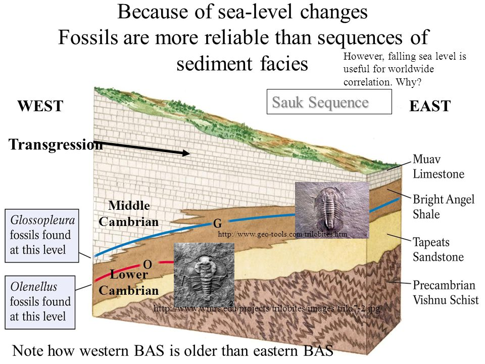 Because of sea-level changes Fossils are more reliable than sequences of sediment facies Sauk Sequence Transgression Note how western BAS is older tha