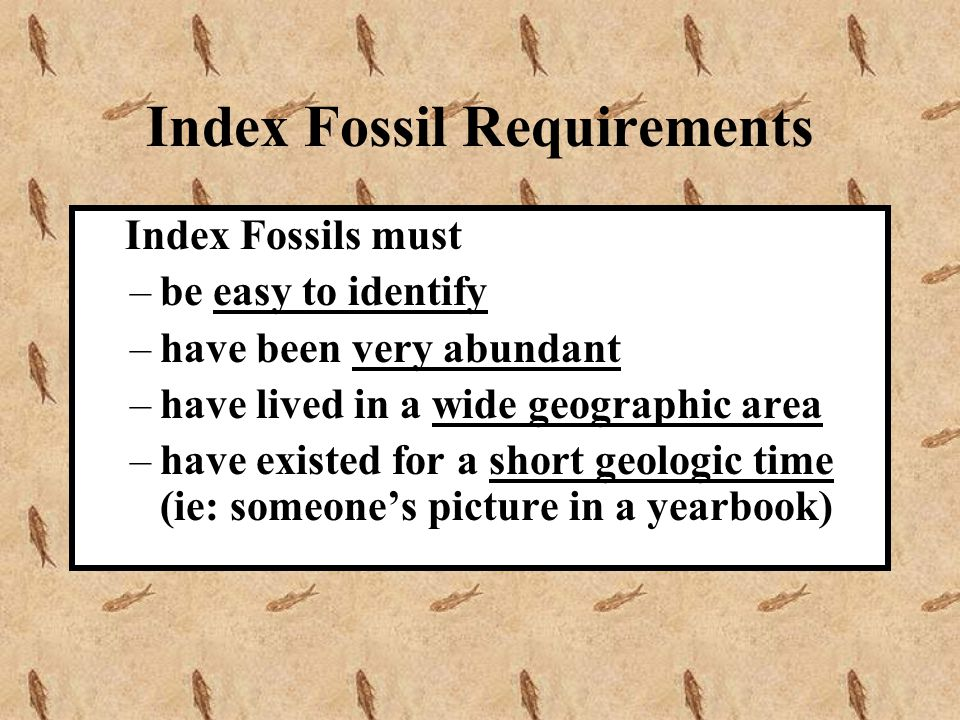 Index Fossil Requirements Index Fossils must –be easy to identify –have been very abundant –have lived in a wide geographic area –have existed for a s