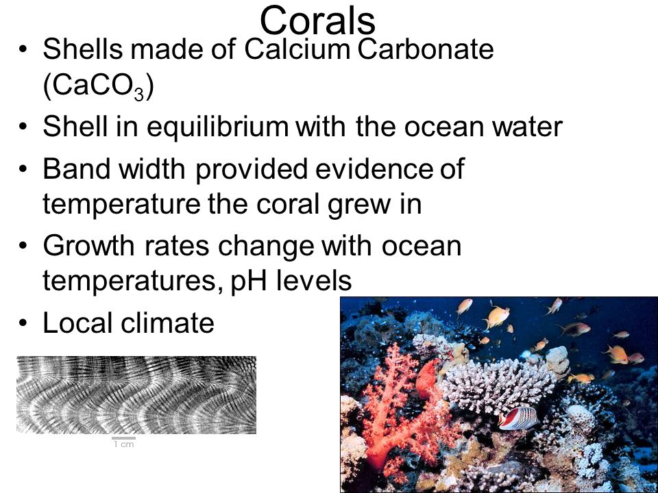 Corals Shells made of Calcium Carbonate (CaCO 3 ) Shell in equilibrium with the ocean water Band width provided evidence of temperature the coral grew in Growth rates change with ocean temperatures, pH levels Local climate