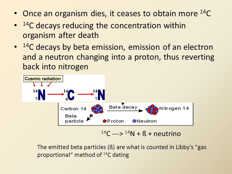 Once an organism dies, it ceases to obtain more 14 C 14 C decays reducing the concentration within organism after death 14 C decays by beta emission, emission of an electron and a neutron changing into a proton, thus reverting back into nitrogen The emitted beta particles (ß) are what is counted in Libby s gas proportional method of 14 C dating 14 C ---> 14 N + ß + neutrino