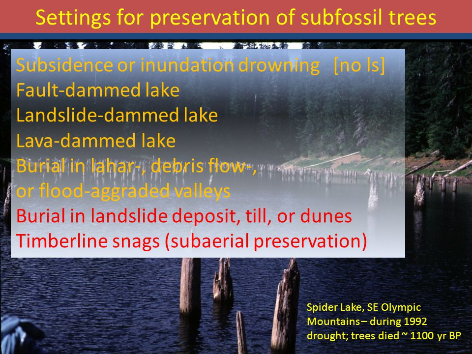 Subsidence or inundation drowning [no ls] Fault-dammed lake Landslide-dammed lake Lava-dammed lake Burial in lahar-, debris flow-, or flood-aggraded valleys Burial in landslide deposit, till, or dunes Timberline snags (subaerial preservation) Spider Lake, SE Olympic Mountains – during 1992 drought; trees died ~ 1100 yr BP Settings for preservation of subfossil trees