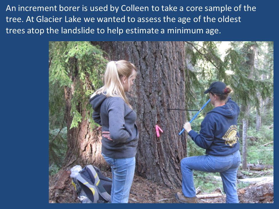 An increment borer is used by Colleen to take a core sample of the tree. At Glacier Lake we wanted to assess the age of the oldest trees atop the land