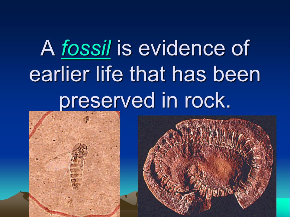 A fossil is evidence of earlier life that has been preserved in rock. fossil
