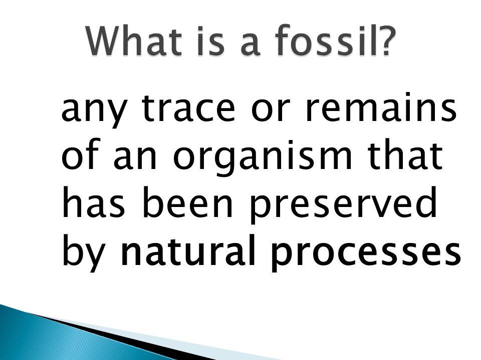 Fossils Comparative anatomy Embryology Biochemistry/genetics