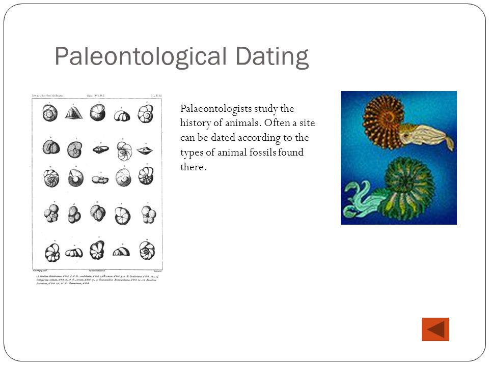 Paleontological Dating Palaeontologists study the history of animals. Often a site can be dated according to the types of animal fossils found there.