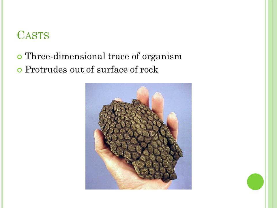 C ASTS Three-dimensional trace of organism Protrudes out of surface of rock