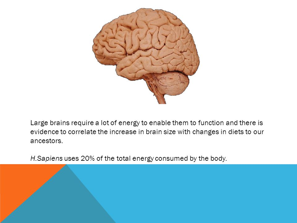 Large brains require a lot of energy to enable them to function and there is evidence to correlate the increase in brain size with changes in diets to our ancestors.