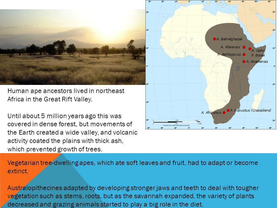 Human ape ancestors lived in northeast Africa in the Great Rift Valley.