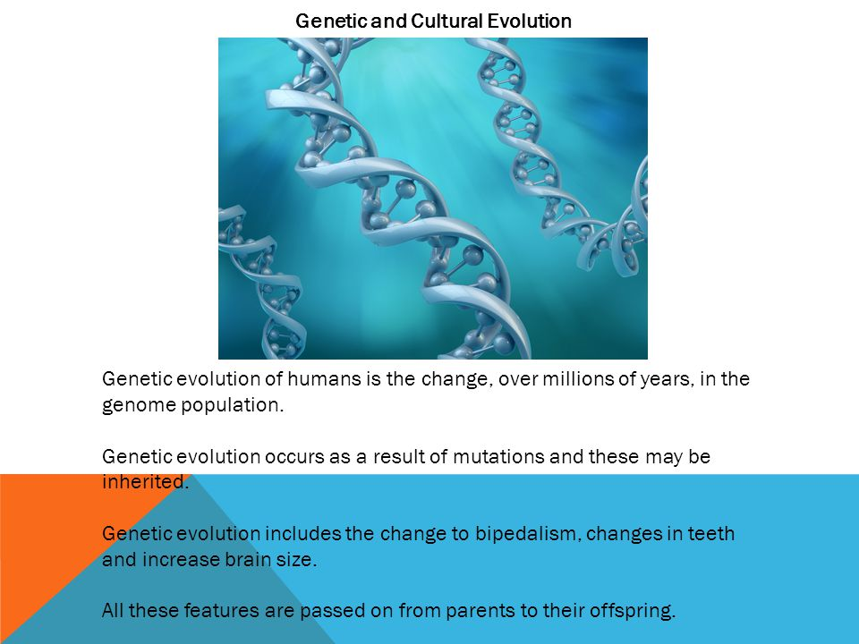 Genetic and Cultural Evolution Genetic evolution of humans is the change, over millions of years, in the genome population.