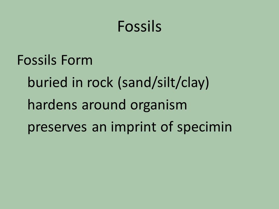 Fossils Fossils Form buried in rock (sand/silt/clay) hardens around organism preserves an imprint of specimin