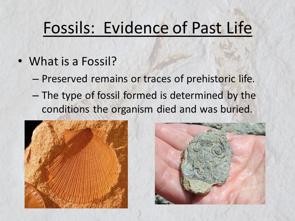 Fossils: Evidence of Past Life What is a Fossil? – Preserved remains or traces of prehistoric life. – The type of fossil formed is determined by the c