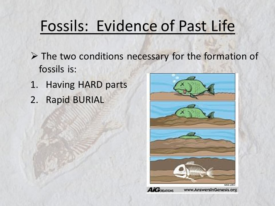 Fossils: Evidence of Past Life The two conditions necessary for the formation of fossils is: 1.Having HARD parts 2.Rapid BURIAL