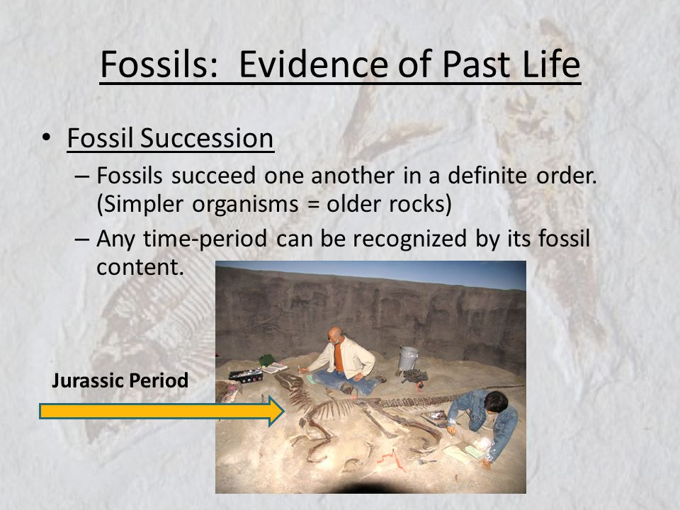Fossils: Evidence of Past Life Fossil Succession – Fossils succeed one another in a definite order. (Simpler organisms = older rocks) – Any time-perio