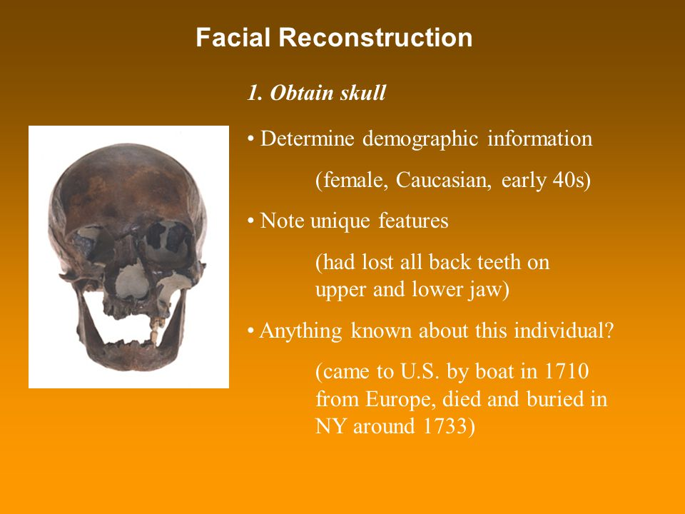 Facial Reconstruction Determine demographic information (female, Caucasian, early 40s) Note unique features (had lost all back teeth on upper and lowe