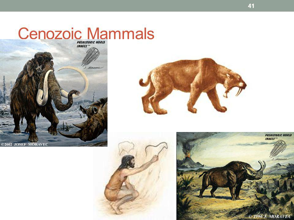 Cenozoic Era Marine animal examples: Algae, Mollusks, Fish and Mammals Land animal examples: Bats, Cats, Dogs, Cattle and Humans Humans are thought to