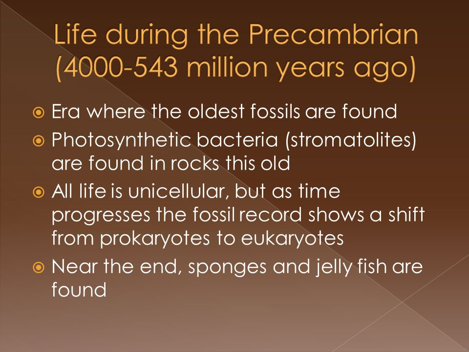 Era where the oldest fossils are found Photosynthetic bacteria (stromatolites) are found in rocks this old All life is unicellular, but as time progresses the fossil record shows a shift from prokaryotes to eukaryotes Near the end, sponges and jelly fish are found