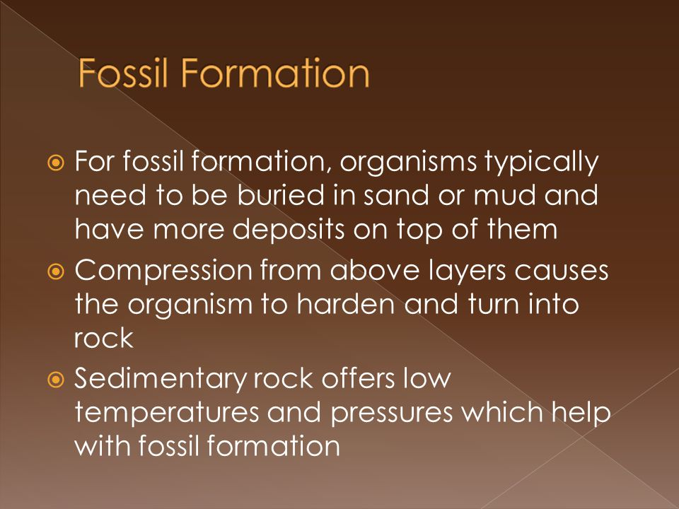For fossil formation, organisms typically need to be buried in sand or mud and have more deposits on top of them Compression from above layers causes the organism to harden and turn into rock Sedimentary rock offers low temperatures and pressures which help with fossil formation