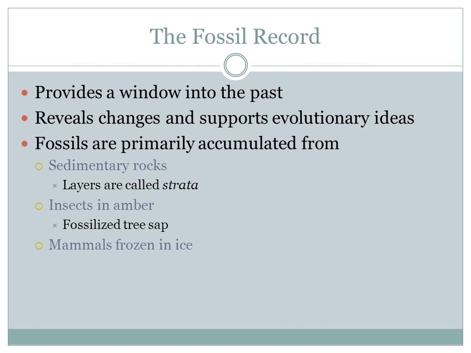The Fossil Record Provides a window into the past Reveals changes and supports evolutionary ideas Fossils are primarily accumulated from Sedimentary rocks Layers are called strata Insects in amber Fossilized tree sap Mammals frozen in ice