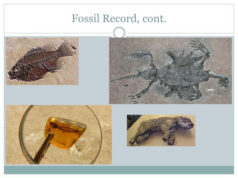 Fossil Record, cont.