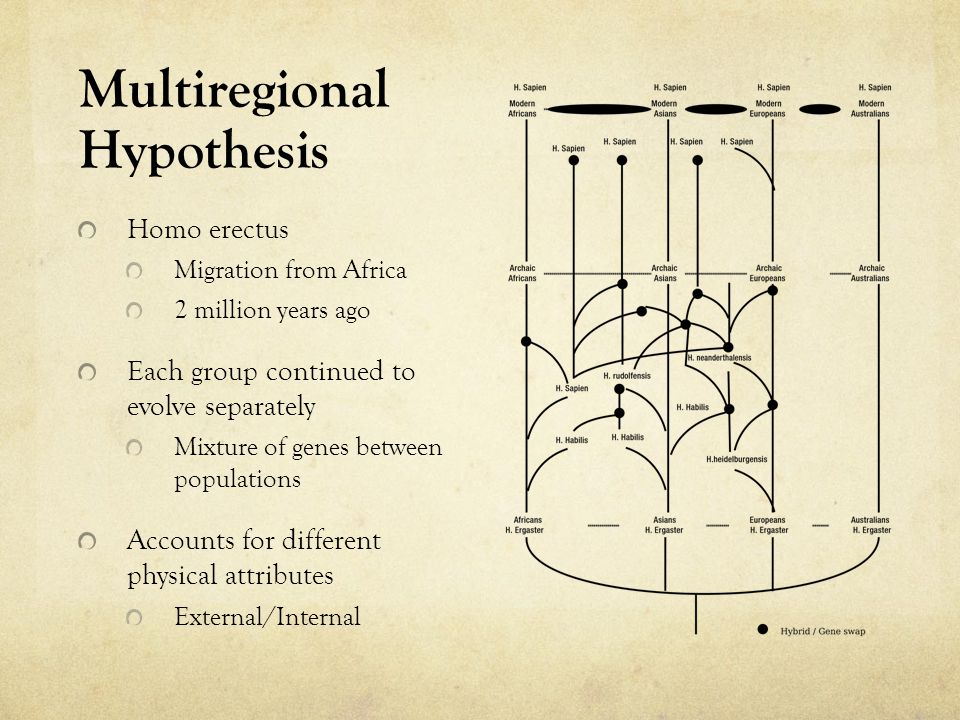 Multiregional Hypothesis Homo erectus Migration from Africa 2 million years ago Each group continued to evolve separately Mixture of genes between pop