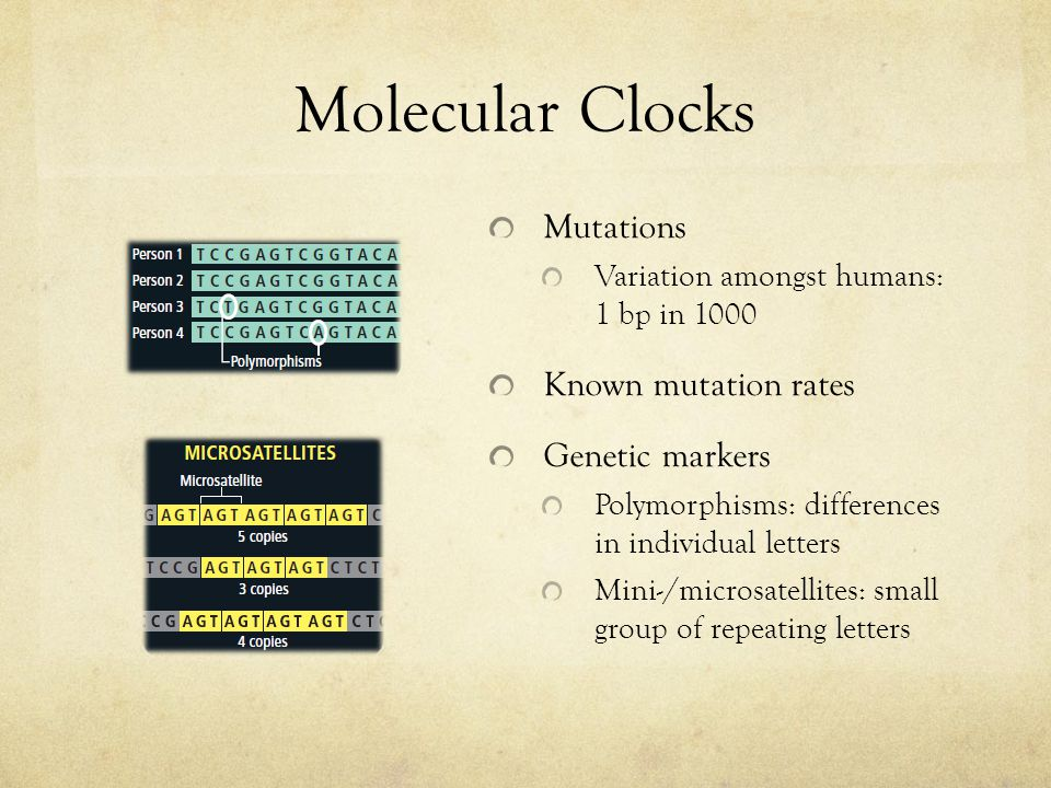 Molecular Clocks Mutations Variation amongst humans: 1 bp in 1000 Known mutation rates Genetic markers Polymorphisms: differences in individual letter