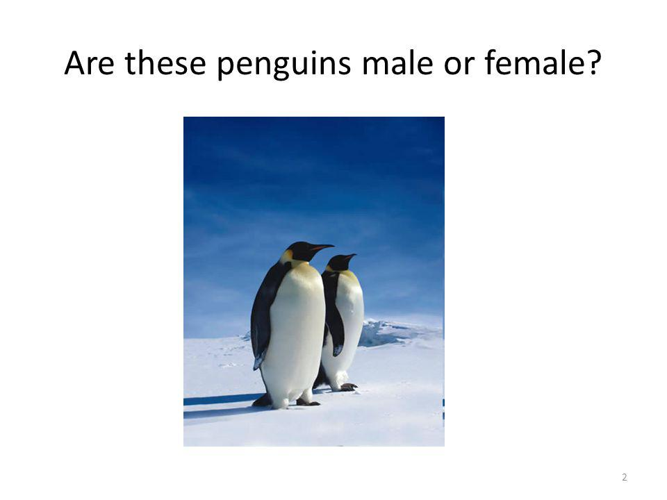 Are these penguins male or female 2