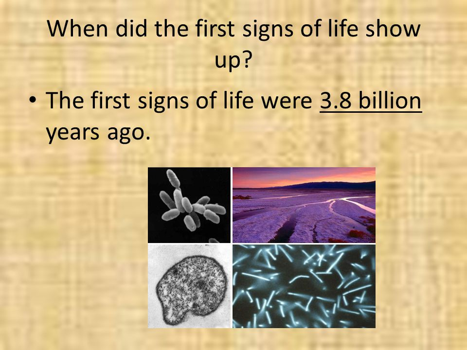 When did the first signs of life show up? The first signs of life were 3.8 billion years ago.