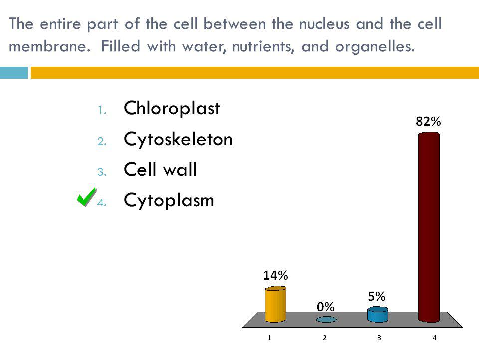 The entire part of the cell between the nucleus and the cell membrane.